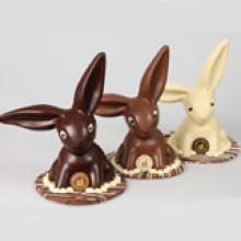Large Floppy Ear White Chocolate