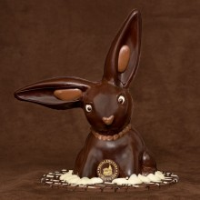 Large Floppy Ear Dark Chocolate